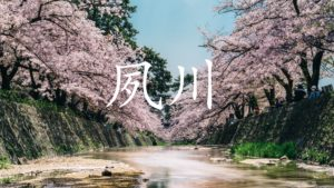 【2021年】 夙川の桜 開花状況 (4月5日更新)を伝える記事(4月1日からライトアップ)