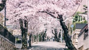 神戸市灘区の「桜のトンネル」が美しい!アクセスは市バスがオススメ!